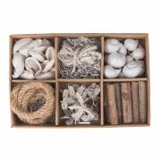 Schelp Decoratie Box Conn, 6 dlg.