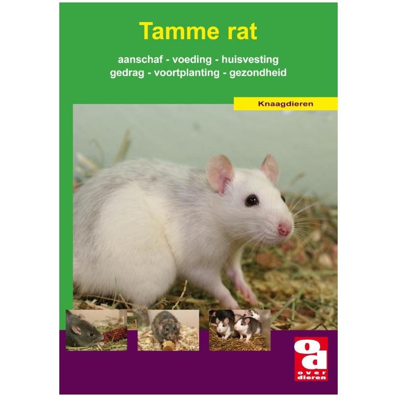 rat online inloggen